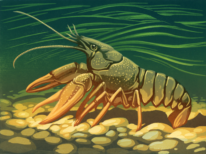 CRAYFISH-PRINT-for-web.jpg