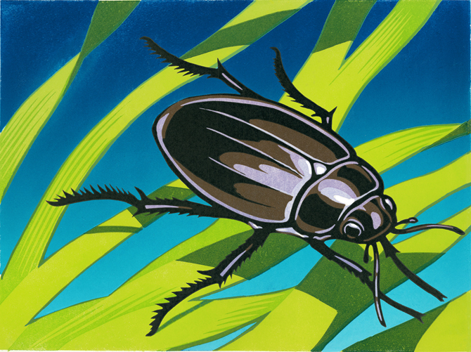 New-Beetle-print-for-web-blog_20130803-094655_1.jpg