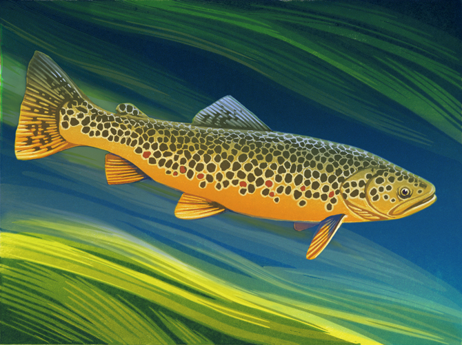 TROUT-PRINT-for-web.jpg